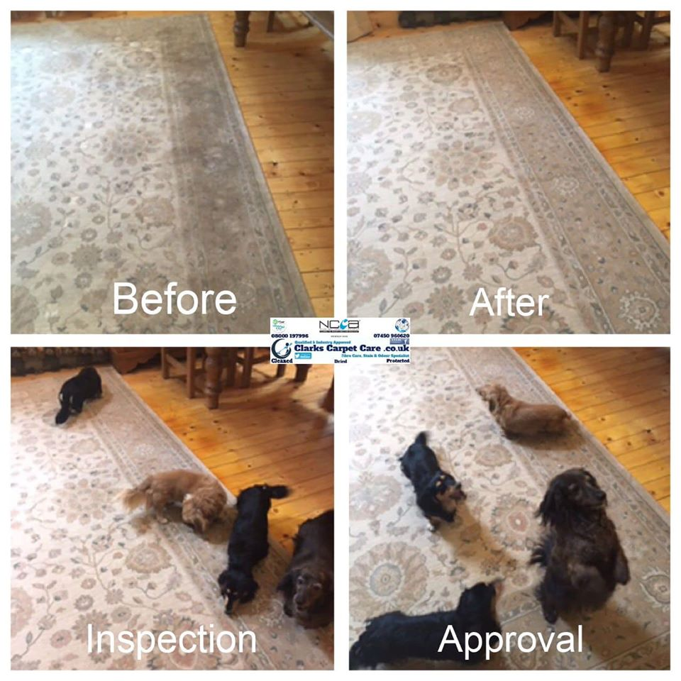 Dog Approved Carpet Cleaning Edinburgh