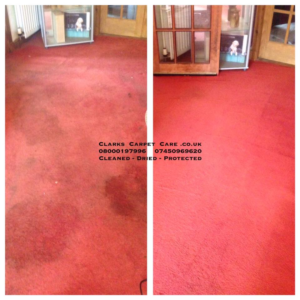 Professional Carpet Cleaning Edinburgh